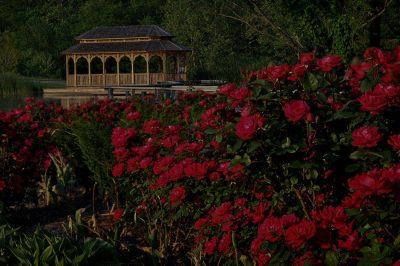 CREATION MUSEUM:  Botanical Gardens